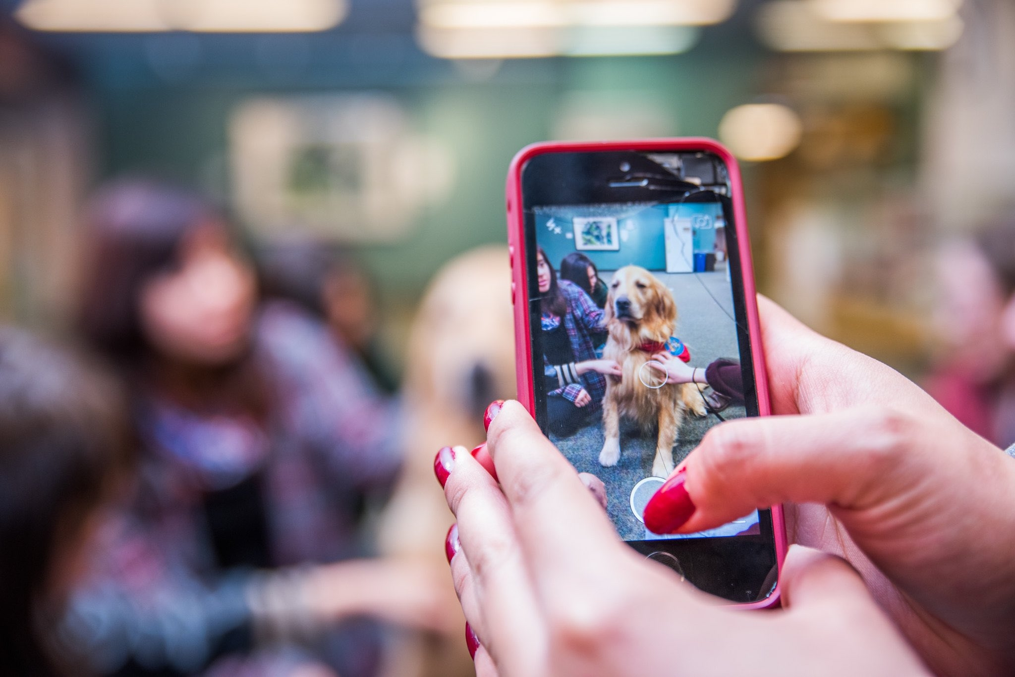 A photo of a smartphone screen with a dog in the frame